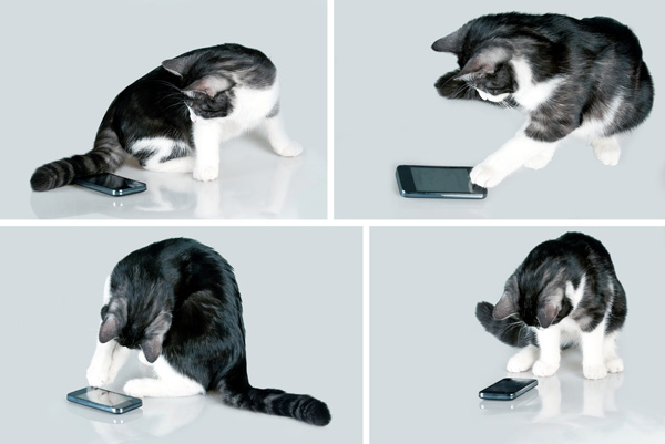 cat-with-cell-phone.jpg